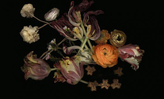 Luzia Simons lança um olhar barroco sobre a natureza – Aldonso Palácio