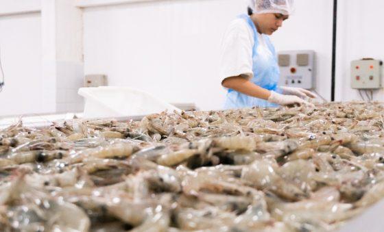 Exportação de pescado no Ceará salta 66,7% em um ano, segundo Sedet