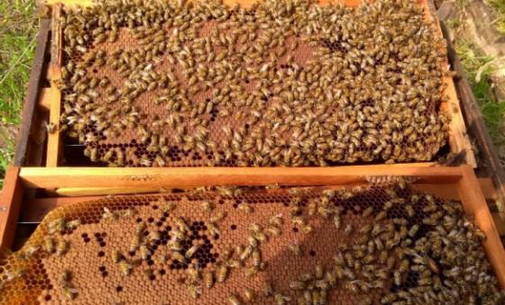 Exportação do mel cearense cresce 35%
