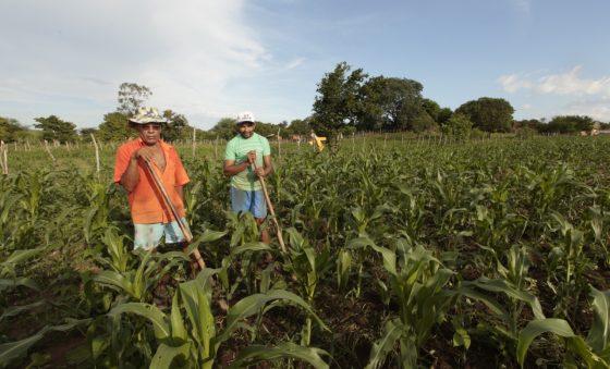Safra de grãos em setembro cresceu 42,48% no Ceará