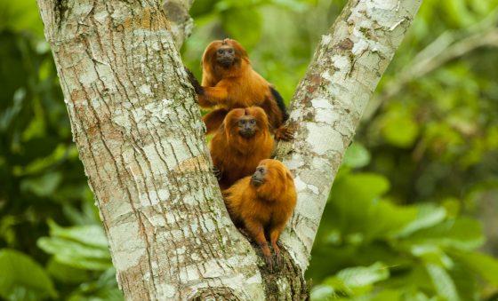 Fundação Grupo Boticário de Proteção à  Natureza une marcas em prol do meio ambiente