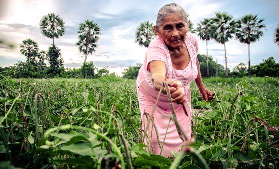 Previsão da safra de grãos no Estado é de 794 mil toneladas em novembro