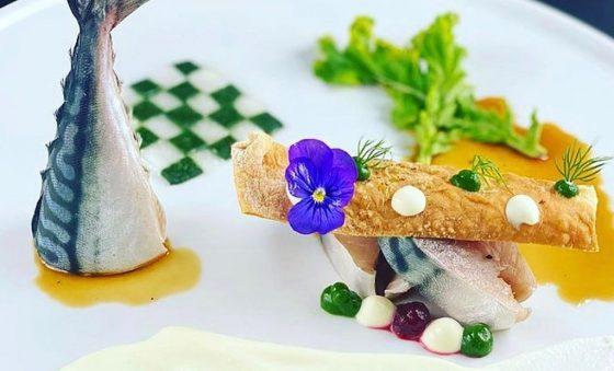 Peixes do bem – Pipo Gurjão