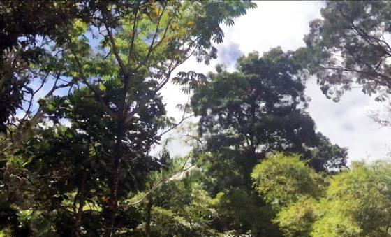 Sinfonia da natureza – Totonho Laprovitera