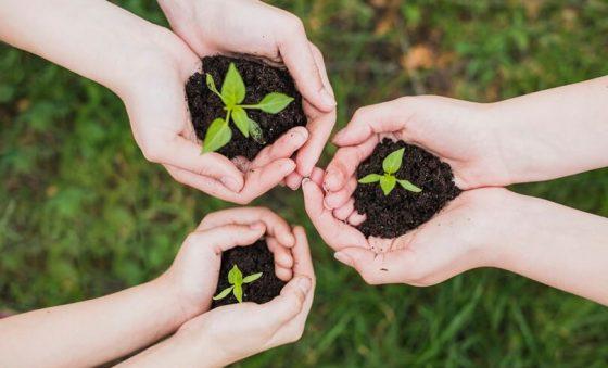 Transparência e sustentabilidade